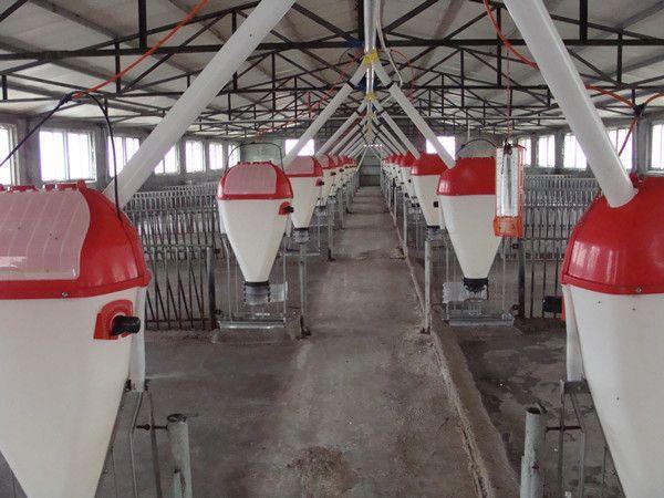 猪场自动化料线 猪舍料线 养猪设备全自动料线 料塔