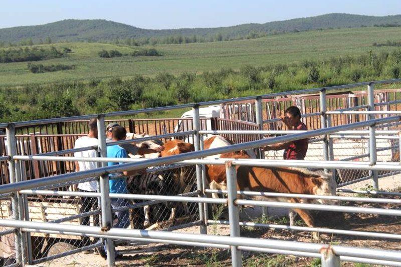吉林草原牲畜交易求推荐