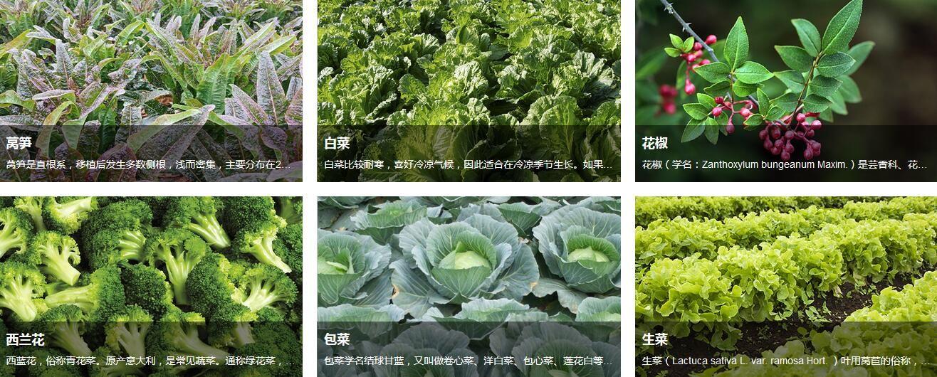 綠色蔬菜哪家好