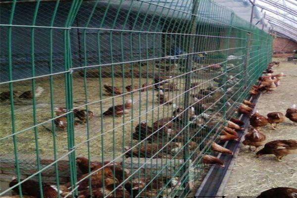 养殖场围栏网-养鸡场围栏生产厂家
