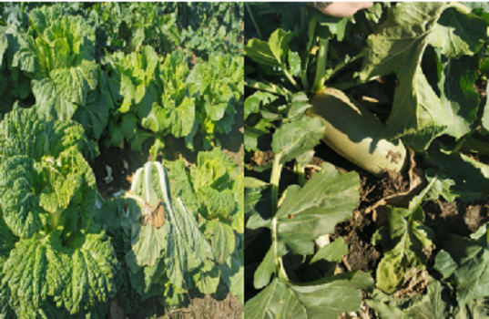 沈陽農用土壤改良價格
