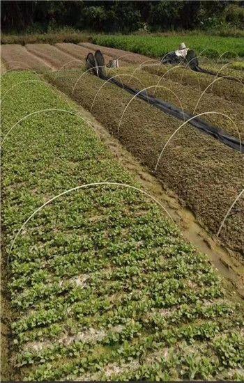 玻璃纤维棒 蔬菜瓜果爬藤 黄瓜支架 豆角支架 花卉园艺拱棚