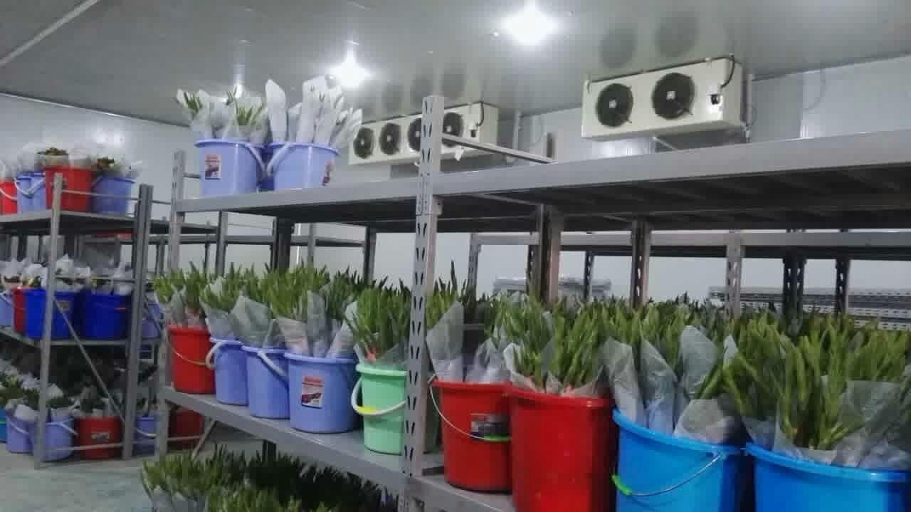 花卉冷庫工程