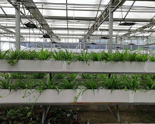 湖北武漢植物工廠 智慧農業設施 項目方案設計 工程實施與建設