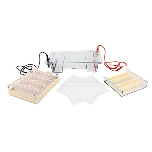 琼脂糖水平电泳仪(中号)生产厂家